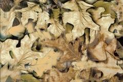 WTP-209-Spring-Leaf
