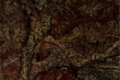 WTP-267-Mothwing-Canyon-Mimicry