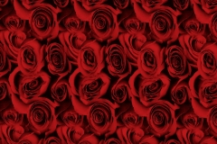 WTP-954-Black-Roses-Red